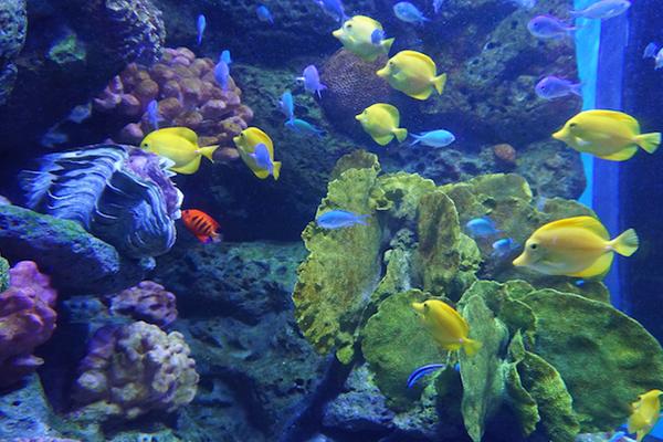 Fish-Sea Life Ocean World Bangkok