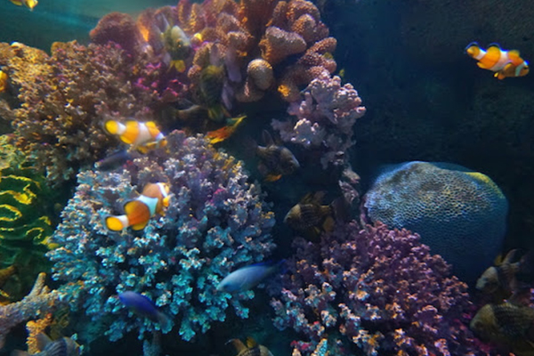 Nemo-Sea Life Ocean World Bangkok